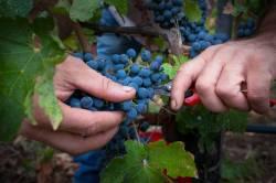Tuscany Wine Region